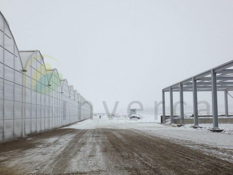 Russia - 10 Ha - Tomato